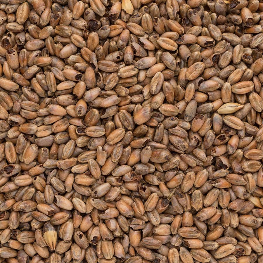 Malto caramellato di frumento in grani Cara Wheat Dark EBC 100