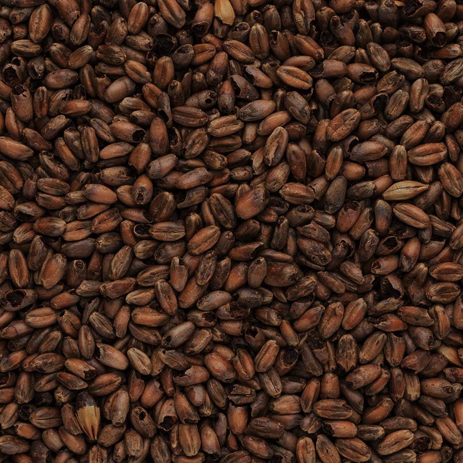 Malto tostato di frumento in grani EBC 1200