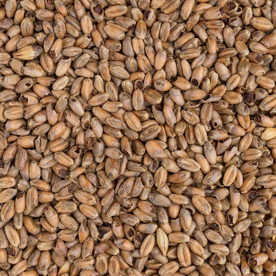 Malto di frumento in grani Cara Wheat EBC 50