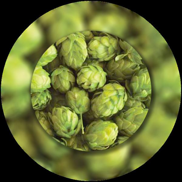 luppolo-celeia